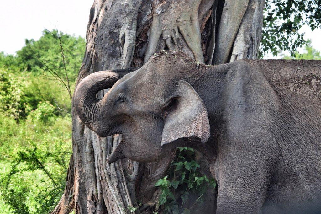Sri Lanka Fil